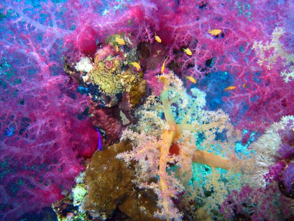 Croisière Abu Fendira et Saint Jonh's Reef